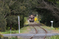Bullarto (Dobpics O'Brien) Tags: diesel daylesford dscr derm 63rm rail railway railways railcar engine train locomotive bullarto musk spa country victorian victoria vr