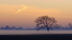 Ground fog (Zoom58.9) Tags: sky fog tree field landscape nature outside autumn europe germany niedersachsen sony sonydscrx10m4 himmel nebel baum feld landschaft natur draussen herbst europa deutschland