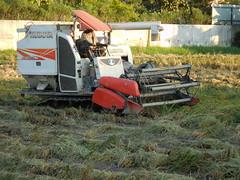 Combining Rice with small Kubota 6 (SierraSunrise) Tags: combine combining thailand isaan esarn phonphisai nongkhai farming harvest harvesting agriculture rice grain poaceae paddyrice ricepaddy ricepaddies