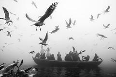 Birds day (Partha Dalal) Tags: birds bird ganges varanasi nikond750 fog monochrome tourist flyimgbirds india fogy foggy