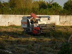 Combining Rice with small Kubota 5 (SierraSunrise) Tags: thailand isaan esarn phonphisai nongkhai farming agriculture rice harvest harvesting paddyrice ricepaddy grain poaceae