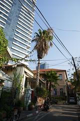 P1040915 (jasonpittock) Tags: israel telaviv jersualem