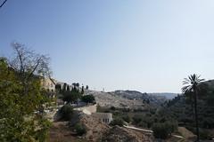 P1040516 (jasonpittock) Tags: israel telaviv jersualem