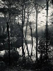 iph8165 (gzammarchi) Tags: italia paesaggio natura ravenna marinaromea piallassabaiona piallassa lago stagno albero pino capanno riflesso bn