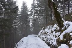 DSC_0013 (Bergwandern Alpen) Tags: alpen alps bergwandern hiking schnee winter wald bergwald waldweg forest mountainforest winterlandscape firs winterlandschaft wandermarkierung mountaintrail