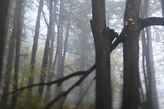 Mount Tabor (Tony Pulokas) Tags: mounttabor mttabor mounttaborpark portland oregon tilt blur bokeh forest tree maple douglasfir fog autumn fall bigleafmaple