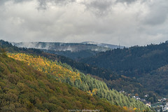 Neckar Valley Forest in Autumn 2019 I (boettcher.photography) Tags: sashahasha boettcherphotos boettcherphotography germany deutschland herbst autumn fall neckargemünd neckartal neckarvalley neckarsteinach hessen kreisbergstrase landschaft landscape natur nature kurpfalz neckarsteig forest wald sky himmel clouds wolken cloudporn badenwürttemberg rheinneckarkreis