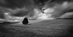 Alone in a field (paullangton) Tags: bw hertfordshire tree mono blackandwhite clouds field lonetree nature landscape countryside shadow mood stubble weather sky