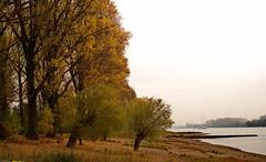 Autumn morning in Leverkusen on the Rhine (tmdittrich) Tags: hdpentaxfa35mmf2al pentaxkp rhein leverkusen morgens morning river