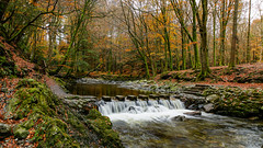 Stepping stones over the Shimna river in Tollymore forest park (jac.photography49) Tags: autumn canon down exposure fullframe fauna images ireland view wideangle 5dmkiii sky rocks mournes northernireland park river tamron2470 trees valley water waterfall 9
