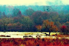 (Alin_B.) Tags: alinbrotea nature autumn fall toamna october november rusty rustic woods forest trees rain smog wet cold