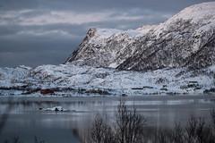 BA0I9894 (Clare Forster) Tags: tromso norway arctic winter november 2019 aurora