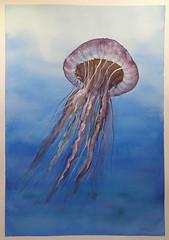 Watercolour Jelly-Fish (Cecilia Temperli) Tags: waterolour jellyfish mixedmedia winsornewton arches archesmedium140lbs archesmedium300gsm mushroomcapjellyfish