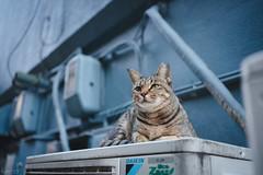 猫 (fumi*23) Tags: ilce7rm3 sony sel35f18f emount 35mm fe35mmf18 a7r3 animal alley street cat chat katze neko ねこ 猫 ソニー