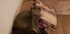 Luna (M0JRA) Tags: cat cats pets animals rescue