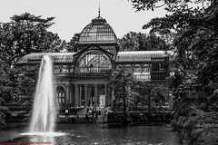 2012 JULY PALACIO DE CRISTAL PARQUE DEL BUÉN RETIRO-Madrid (FRANCISCO DE BORJA SÁNCHEZ OSSORIO) Tags: palaciodecristal blackandwhite blancoynegro bw españa exposure enfoque encuadre exposicion madrid moment love light luz life lovely flechazo focus focuspoint foco framing passion photo pasión primavera photostreet park parquedelretiro parquedelbuenretiro instant instante invierno winter verano vida view spring shot summer streetphoto street amor arrow autumn otoño bokeh beauty belleza nature naturaleza nice timeexposure tiempodeexposición temperaturadecolor color colour composition composición colourtemperature detalle detalles detail details desenfoque disparo divertido delicado delicate dof depthoffield 35mm 50mm objetivonormal