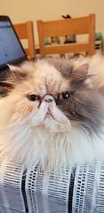 Tinker (M0JRA) Tags: cat cats feline mogs pets animals