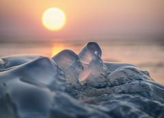 tropical iceberg (gnarlydog) Tags: australia beach jellyfish detail abstract sunset warmlight contrejour backlit translucent transparent shallowdepthoffield selectivefocus bokeh fzuiko32mmf17 goldenhour manualfocus refittedlens adaptedlens