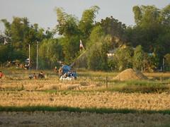 Threshing Rice 1 (SierraSunrise) Tags: threshing thailand isaan esarn phonphisai nongkhai farming harvest harvesting agriculture rice grain poaceae paddyrice ricepaddy ricepaddies