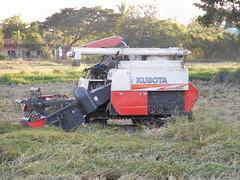 Combining Rice with small Kubota 4 (SierraSunrise) Tags: thailand isaan esarn phonphisai nongkhai farming agriculture rice harvest harvesting paddyrice ricepaddy grain poaceae