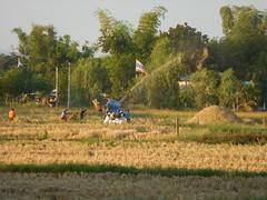 Threshing Rice 2 (SierraSunrise) Tags: threshing thailand isaan esarn phonphisai nongkhai farming harvest harvesting agriculture rice grain poaceae paddyrice ricepaddy ricepaddies