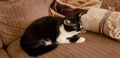 Bella (M0JRA) Tags: cats cat mogs pets rescue animals