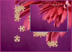 On a rainy day ..... (Elisafox22) Tags: elisafox22 sony nex6 sonye30mmf35 macrolens macro 30mm sliderssunday hss jigsaw photoshop ipad postprocessing photomanipulation flower petals raindrops red chrysanthemum elisaliddell©2019