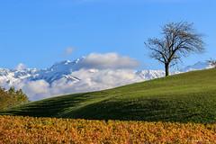 L'arbre et le massif  de belledonne  (Savoie 11/2019) (gerardcarron) Tags: arbres arbre canoneos80d ciel landscape montagne mountains nature neige paysage savoie massifdesbelledonne lesmarches tamron90mmacro