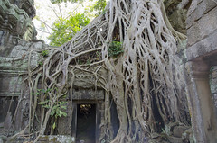 Ta Prohm Temple (Cambodia) (My Wave Pics) Tags: cambodia ancient temple tourism travel religion khmer architecture angkor old stone asia building jungle wat ta buddhism ruin monument siem landmark tree famous reap religious prohm culture cambodian heritage asian unesco history site nature hindu thom historic tropical hinduism wall destination ruins civilization wood buddha world tower forest bayon archeology