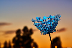 Naturalmente estructurado (AVENTUREROSOY) Tags: 135mm art atardecer autumn aventurerosoy azul backlighting blue ceiling cielo cieloraso color colour contraluz black conceptual d810 dawn españa estructura f18 flickr flor flash flora flower hojas landscape leaves light luz magicworld málaga mundomagico natural negro nikon otoño quiet sb5000 sigma sky spain structure sunset tranquilidad