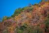 向こうの山の紅葉