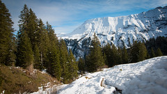 Heading to Morgenberghorn, Switzerland (throzen) Tags: switzerland swiss alps alpine trees mountain mountains hill hills rocky rockies europe landscape nature outside outdoors peaks view views cloud hiking winter scenic scenery photography dslr canon eos 70d snow snowy beauty beautiful