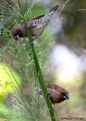 DSC_3398 (melvhsc100) Tags: nature wildlife greenery park bird lightandcolors