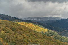 Neckar Valley Forest in Autumn 2019 V (boettcher.photography) Tags: sashahasha boettcherphotos boettcherphotography germany deutschland herbst autumn fall neckargemünd neckartal neckarvalley neckarsteinach hessen kreisbergstrase landschaft landscape natur nature kurpfalz neckarsteig forest wald sky himmel clouds wolken cloudporn badenwürttemberg rheinneckarkreis