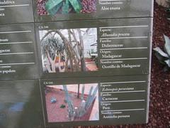 Plant  Information Detail,Arganzuela  Hothouse, Madrid. (d.kevan) Tags: plants arganzuelahothouse madrid zonadesértica1 description photos origin species commonname family