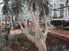 Yucca (?) (d.kevan) Tags: