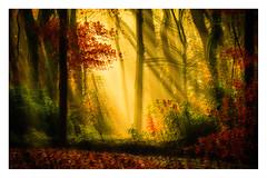 the light (1 of 1)-3 (ianmiddleton1) Tags: autumn fall woodland colours sunshine composite glasgow pollokpark