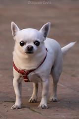 il più feroce cane di Suvereto - Suvereto's fiercest dog 😎😜 (Eugenio GV Costa) Tags: approvato cane dog zampa animal animali animalidomestici