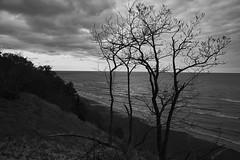 025071a  Reaching For The Canopy Of Clouds (David G. Hoffman) Tags: blackandwhite beach lakemichigan lake lakeshore trees dunes