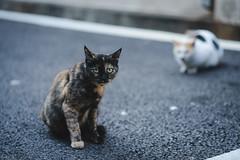 猫 (fumi*23) Tags: ilce7rm3 sony sel85f18 emount 85mm cat chat neko gato a7r3 animal alley bokeh depthoffield ねこ 猫 ソニー 路地