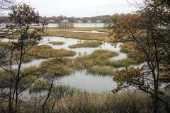 Autumn Marsh (JMS2) Tags: marsh autumn outside outdoor scenic swamp nature foliage marshlands rye