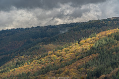 Neckar Valley Forest in Autumn 2019 IX (boettcher.photography) Tags: sashahasha boettcherphotos boettcherphotography germany deutschland herbst autumn fall neckargemünd neckartal neckarvalley neckarsteinach hessen kreisbergstrase landschaft landscape natur nature kurpfalz neckarsteig forest wald sky himmel clouds wolken cloudporn badenwürttemberg rheinneckarkreis
