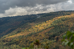 Neckar Valley Forest in Autumn 2019 VII (boettcher.photography) Tags: sashahasha boettcherphotos boettcherphotography germany deutschland herbst autumn fall neckargemünd neckartal neckarvalley neckarsteinach hessen kreisbergstrase landschaft landscape natur nature kurpfalz neckarsteig forest wald sky himmel clouds wolken cloudporn badenwürttemberg rheinneckarkreis