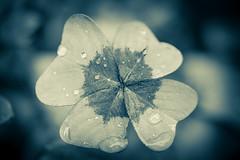 DSC_8596.jpg (pcaille) Tags: macro noirblanc fleur
