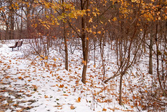 Earl Bales Park, Toronto, Ontario, Canada (Tiphaine Rolland) Tags: winter hiver 2019 earlbalespark park parc toronto ontario canada snow neige cold froid nature forest forêt trees arbres bois wood leaf feuille white blanc