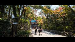 _DSC6076 (kblover24) Tags: sony a7r mk3 a7r3 a7riii riii fe loxia 21 21mm f28 carl zeiss 名古屋 nagoya 犬山城