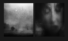 The girl in a grey frock. (andredekok) Tags: girl woman monochrome bw textures poetry birds railroad grey dark dreamy gloomy autumn diptych