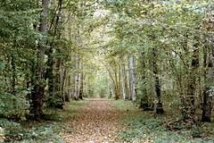 Forêt de Dreux (Philippe_28) Tags: 28 eureetloir france europe argentique analogue camera photographie film 135 forêt dreux