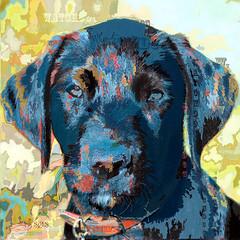 IMG_7975 Watchdog (SØS'Art) Tags: animal dog dyr hund painting solveigøsterøschrøder art artistic photoshop filterforge nature digitalart photomanipulation 100views