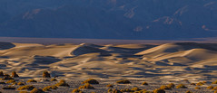 Death Valley Winter Light 2018 (2) (Jeff Sullivan (www.JeffSullivanPhotography.com)) Tags: winter light sand dunes death valley workshop national park sunrise mesquite flat deathvalley nationalpark stovepipe wells california usa landscape photography canon eos 5d mark iv road trip jeff sullivan allrightsreserved photo copyright december 2018 panorama